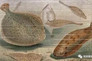 比目鱼品种有哪些