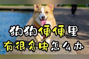 狗狗大便有白色细细长长的虫子