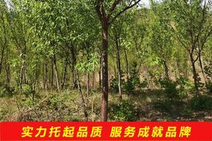 我在云南龙陵种植红花油茶,苗地里的杂草该用什么除草药除草