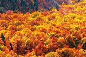 我喜欢秋天作文100字