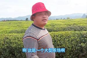 茶叶的利润点是多少?