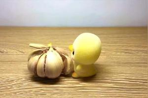 大蒜的生长记录