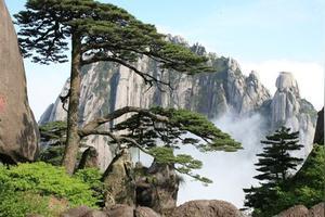 去黄山,如果我要去光明顶和迎客松,路线该怎么走比较好呢?