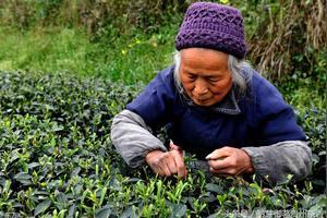 请问市场茶叶的利润大吗?有多少?