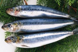 海鲜里面,你最喜欢吃什么呢?有什么料理心得吗