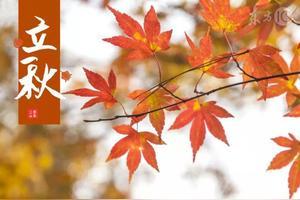 今日立秋,农村老人常说的啃秋是什么意思?
