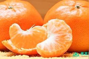 家乡的橘子作文100字
