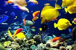 青岛海底世界为话题的作文200字第2篇图片