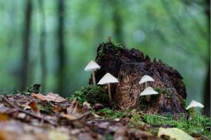 蘑菇是植物吗