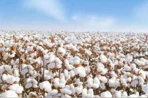 为什么棉花和白糖玻璃也是战略物资
