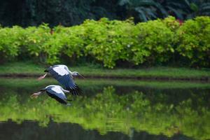 东北有一种鸟大家叫它油拉鹳子请问这种鸟的学名叫什么