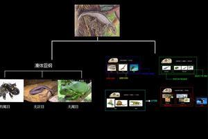 现代爬行类分为几个目?试述各目的主要特征及代表动物